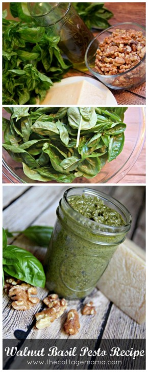 Walnut Basil Pesto Recipe - The Cottage Mama.